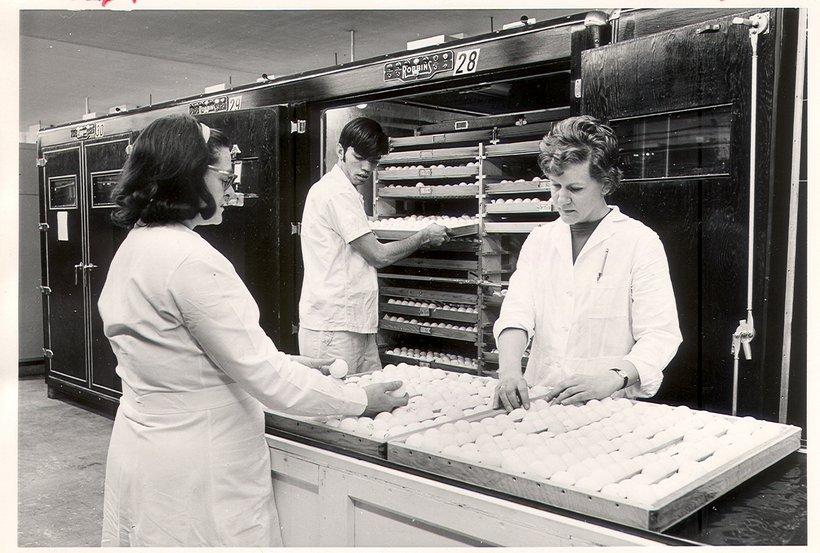 1972 egg workers.jpg
