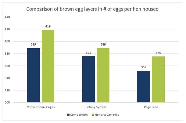 1b graph brown eggs HH.jpg
