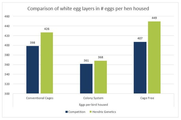 2b graph white eggs HH.jpg