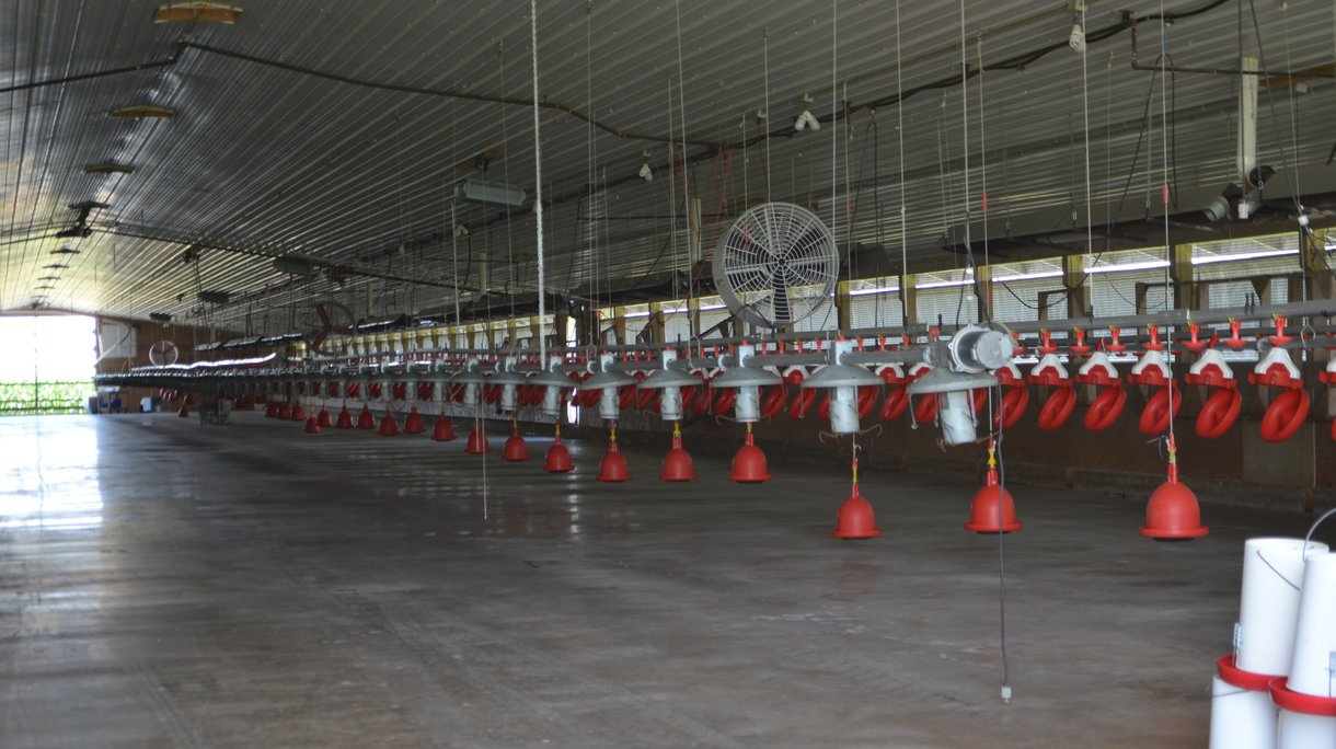 barn cleaning and disinfection