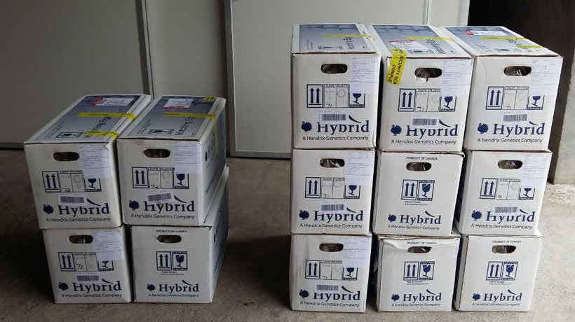 China export egg boxes
