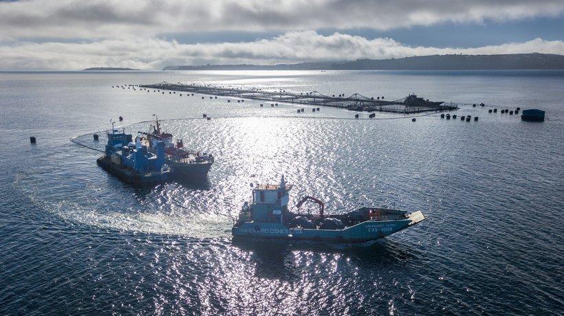 Sentinel sites salmon