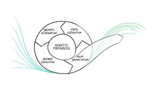 Gene Engine