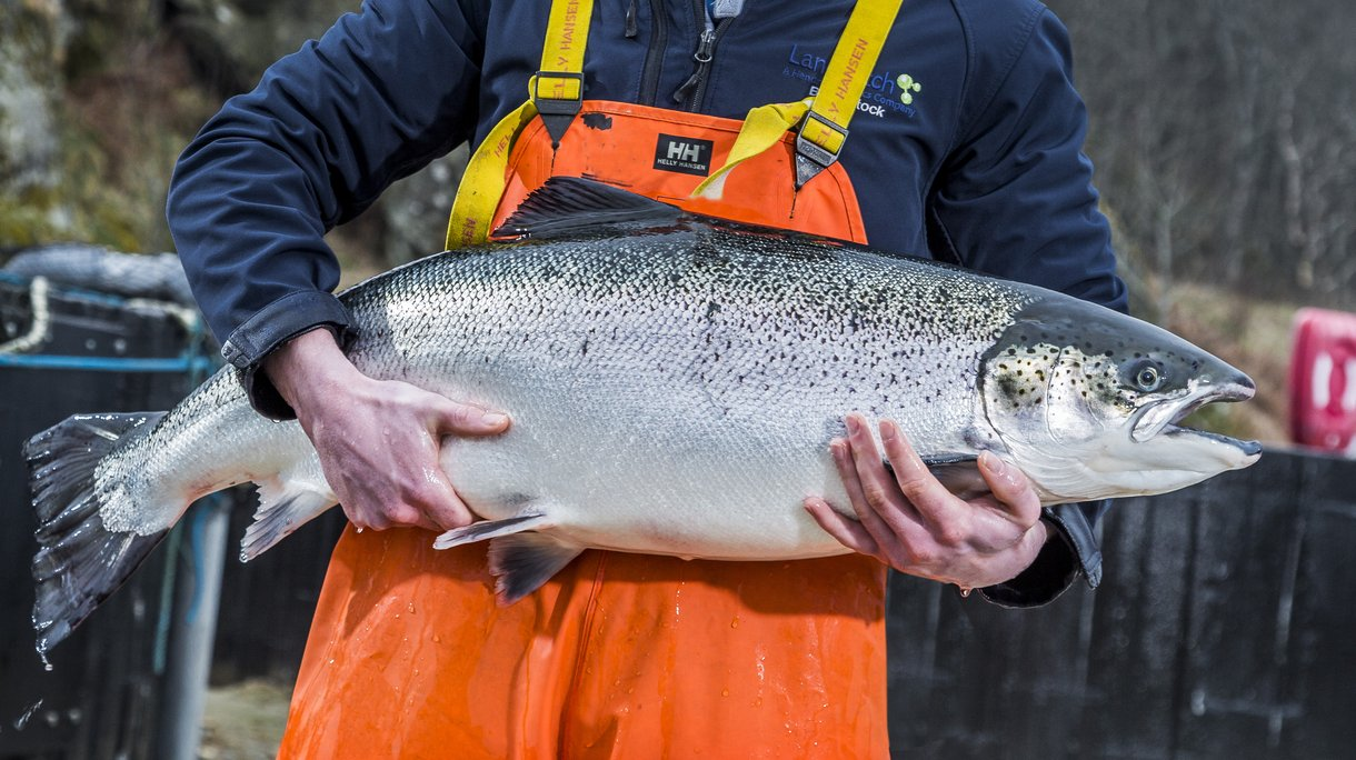 HR salmon (21).jpg