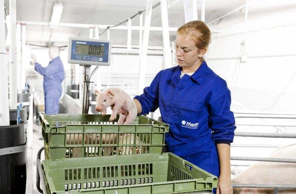 HR swine (8).jpg