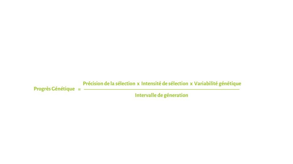GeneticFormula_FR.jpg