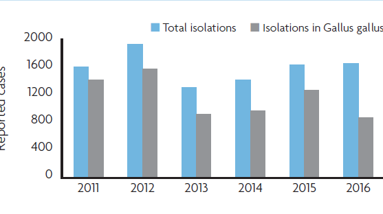 Reported isolations of Salmonella enteritidis from animals in EU.png