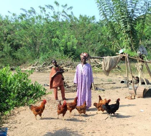 Sustainable African Chicken