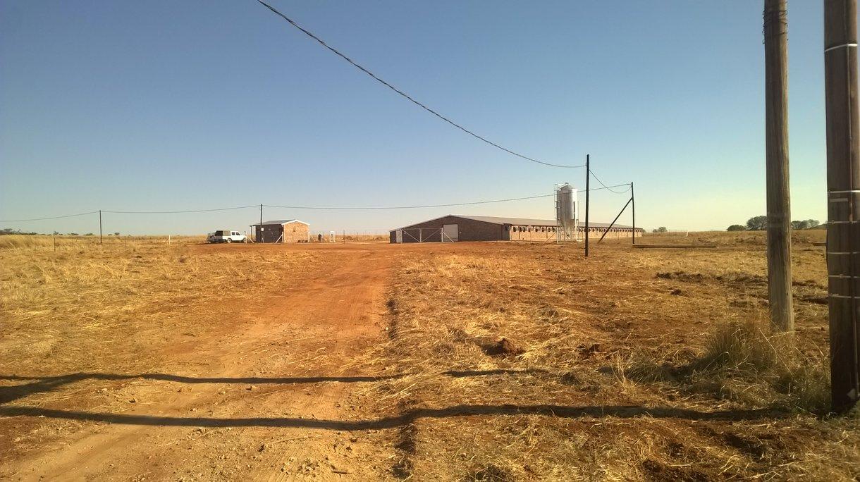 Dekalb in south africa3