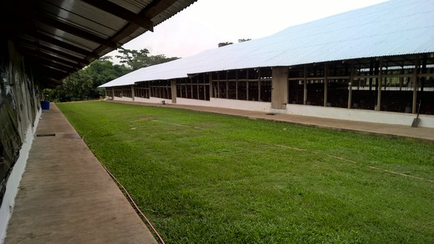 Isa export Ghana 4