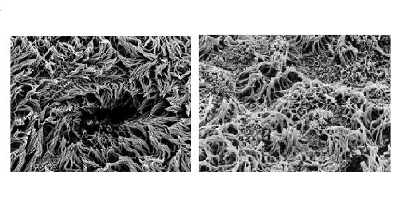 cilia effect