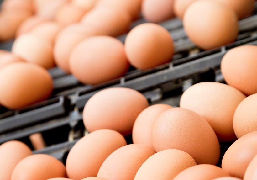 egg1s.jpg