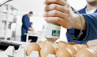 egg quality b.jpg