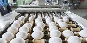 鸡蛋的面积