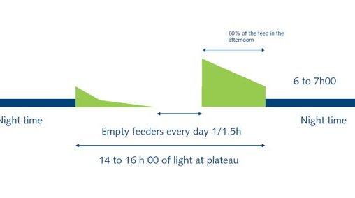 empty feeder v2