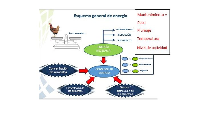 energy scheme SP