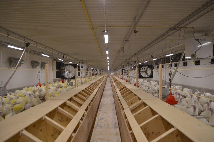LED lights breeder barn
